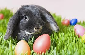 The Real Reason We Celebrate Easter… and It's NOT About the Bunnies